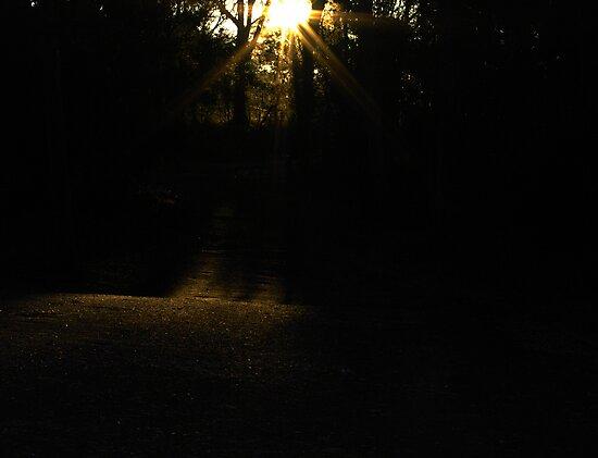 light by feeee