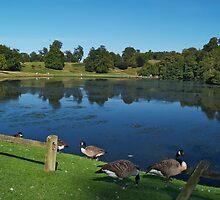 Lake with Waterfowl by WatscapePhoto