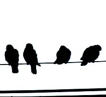 Birds on a Wire  by Pearle