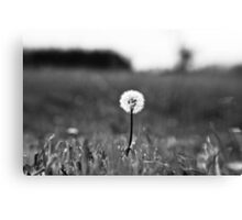 I've lost my focus Canvas Print