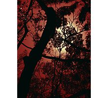 The Glow - Fiery Photographic Print