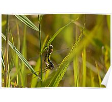 Common Hawker in hot love action!! Poster