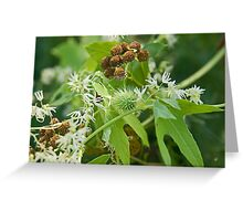 Wild Cucumber Greeting Card