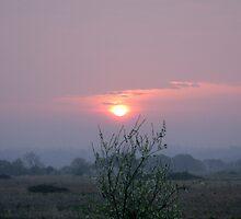 Morning Has Broken by Chris Corney