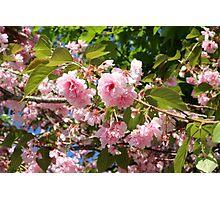 Boston Flowers Photographic Print