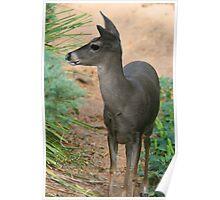 Deer - Gentle Poster