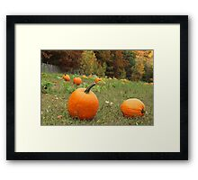 Pumpkin Picking Framed Print