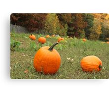 Pumpkin Picking Canvas Print