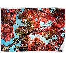Autumn Color Tree Poster