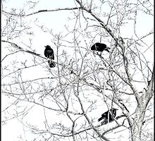Five Crows in a Tree by Pearle
