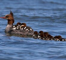 Hitching a Ride by Martin Smart