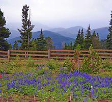 Mountain Meadow in Purple by Leona Bessey