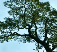 Lone Tree Sticker