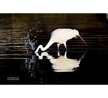 Ardea Alba - Great White Egret Catching Fish In Porpoise Channel | Stony Brook, New York Photographic Print