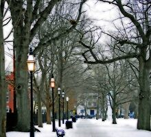 Path Through the Salem Commons by Monica M. Scanlan