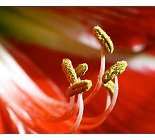 Stamen by Jason Dymock Photography