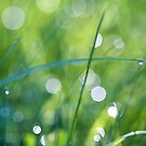 Morning Dew by Christopher Bookholt