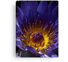 Heart of the Lily Canvas Print