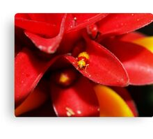 Red and Yellow bug Canvas Print