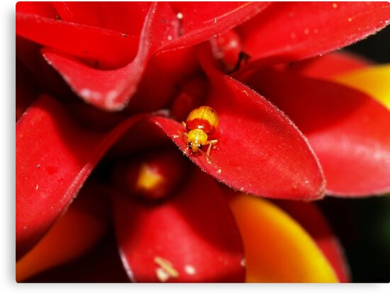 Red and Yellow bug by Jason Dymock Photography