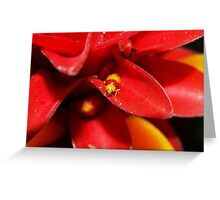 Red and Yellow bug Greeting Card