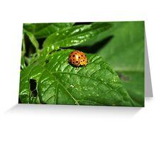 Fake Lady Beetle Greeting Card