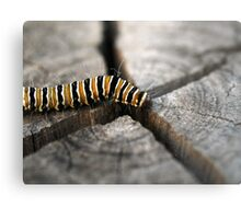 On the way to Butterfly Metal Print