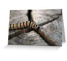 On the way to Butterfly Greeting Card