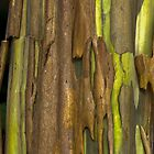 Green Bark 2 by Werner Padarin