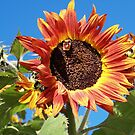 Sunflower and Matching bee by Elisabeth Dubois