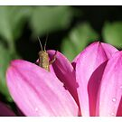 Mr Cricket by Jason Dymock Photography