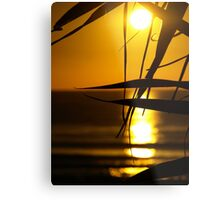 Leaves in the Sunlight Metal Print