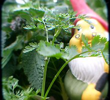 Parsley Gnome by Northcote Community  Gardens