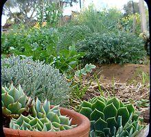 Liz's Plot by Northcote Community  Gardens