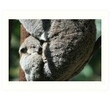 Currumbin Baby Koala Art Print
