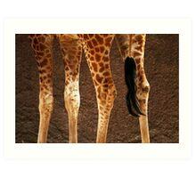 Giraffe Legs Art Print