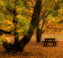 Autumn in Mt Victoria by sonjas