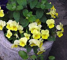 Troughs with Pansies by Betty Mackey