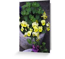 Troughs with Pansies Greeting Card