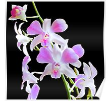 Tiny Orchids Poster