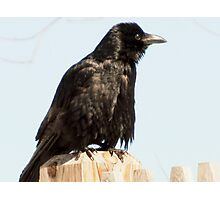Oh this Crow Photographic Print