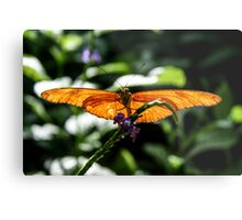 sunning his wings Metal Print