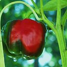 red green pepper by ANNABEL   S. ALENTON