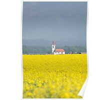 Rapeseed field with church in background, Slovenia Poster