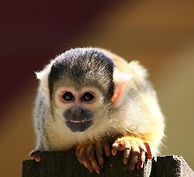 Squirrel Monkey by Anne-Marie Bokslag