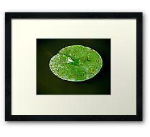 Lily Pad. Framed Print