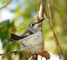 Nest of the Hummingbird by JustSaul