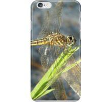 Blue Dasher on Native Grass iPhone Case/Skin
