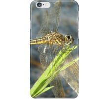 Blue Dasher on Native Grass iPhone Case/Skin