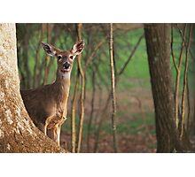 Shy Deer Photographic Print